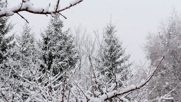 Cover Image for Snow Falling In A Forest Winter Storm