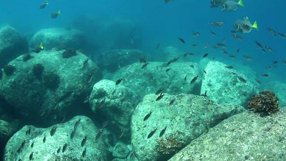 Thumbnail for Fish Mexico Diving Baja California Sur 11