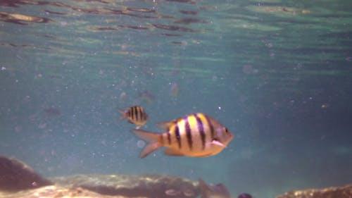 Snorkel Park Cancun Mexico Fish 1