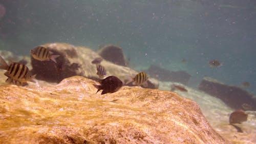 Snorkel Park Caribbean Mexico Cancun