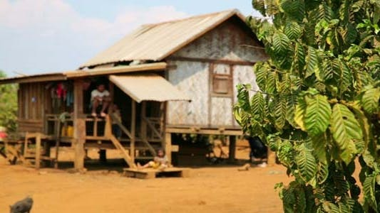 Thumbnail for Lao Village Life Around Coffee Planted 5