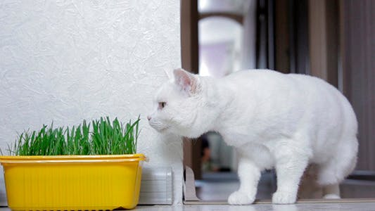 Cat Sniffing Grass
