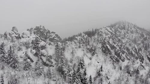 Aerial View of Snowy Foggy Winter Forest During Snowfall in Coniferous Mountain Forests