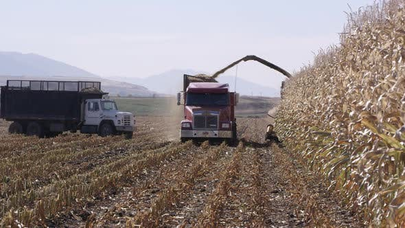 Thumbnail for View of combine filling truck in cornfield