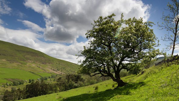 Thumbnail for Brecon Beacons Wales Field Countryside 5