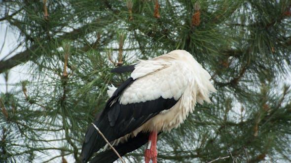 Thumbnail for Storks Birds Nesting Park Water 2
