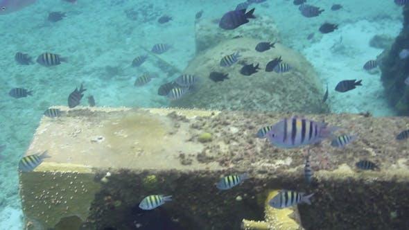 Underwater Snorkeling In Mexico 10
