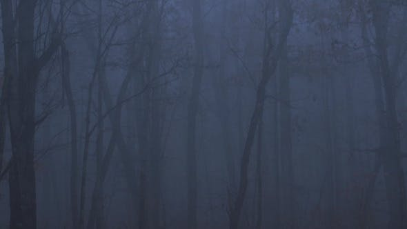 Thumbnail for Scary Forest with Fog