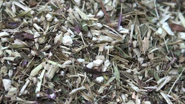 Thumbnail for Echinacea Tea