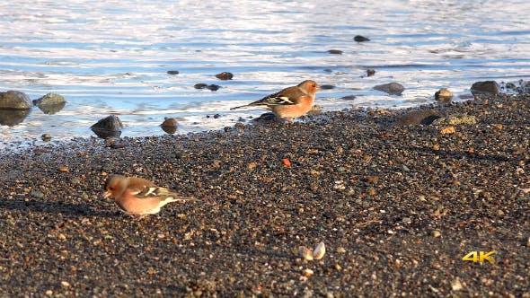 Thumbnail for Birds Near the Lake
