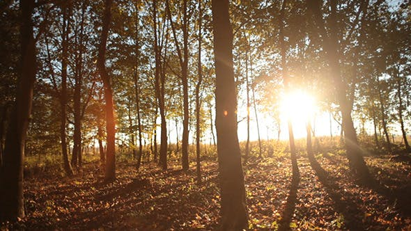 Thumbnail for Forest in Autumn 2