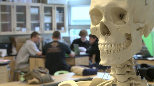 Skeleton In Science Class (3 Of 3)