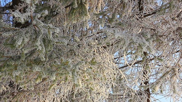 Thumbnail for Winter Frozen Branches