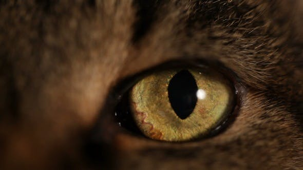 Thumbnail for Cat's Eye