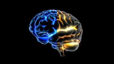 Brain Rotation