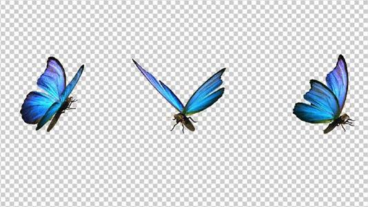 Flying Butterfly - Blue Swallowtail