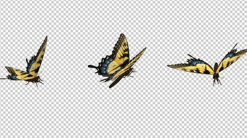 Flying Butterfly - Yellow Swallowtail