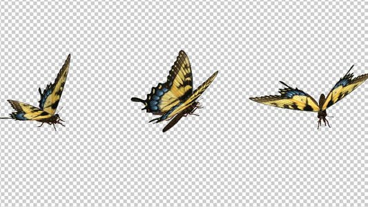 Thumbnail for Flying Butterfly - Yellow Swallowtail