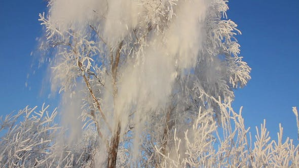 Thumbnail for Beautiful Ice Winter Tree And Snow Falling