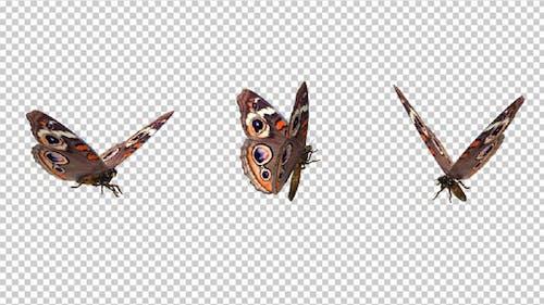 Flying Butterfly - American Buckeye