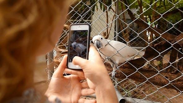 Thumbnail for Smartphone prenant des photos de perroquet
