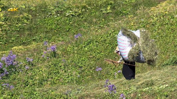 Thumbnail for Peasant Women Working in the Fields 3