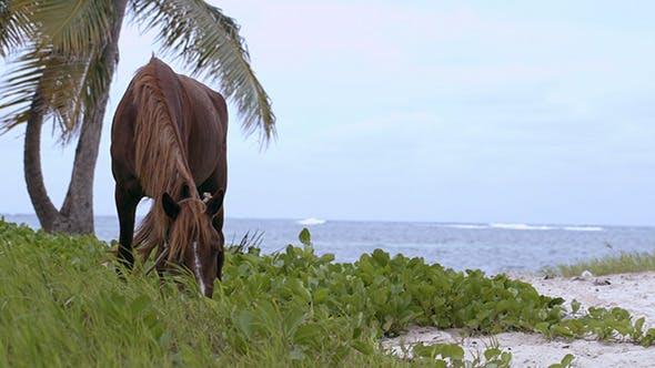 Thumbnail for Gebunden Pferd Essen Gras auf der Küste