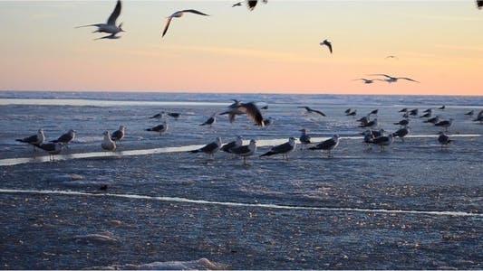 Thumbnail for Seagulls 3