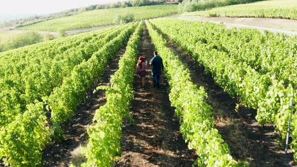 Thumbnail for Aerial Footage of Caucasian Couple Walking in Vineyard