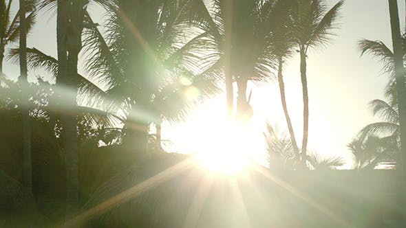 Thumbnail for Bright Evening Sun Shining Among The Palms