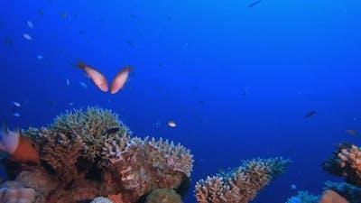 Fish Marine Garden