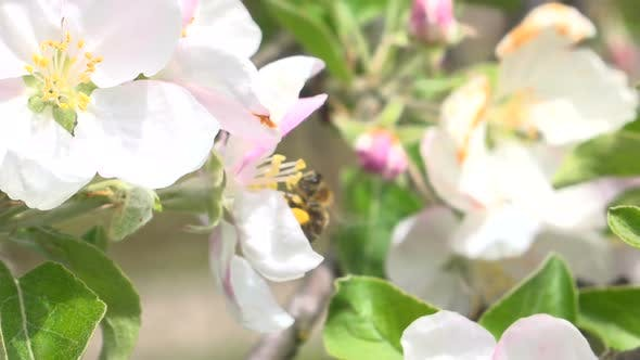 Thumbnail for Bee and Flowers