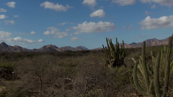 Thumbnail for Kaktus Desert Baja California Sur Mexico 6
