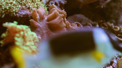 Fish Sealife Marine Aquarium Wildlife Underwater 3