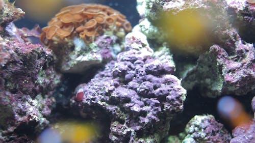 Fish Sealife Marine Aquarium Wildlife Underwater 13