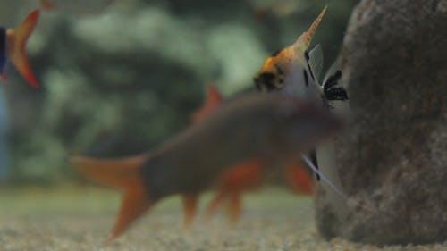 Fish Sealife Marine Aquarium Wildlife Underwater 20
