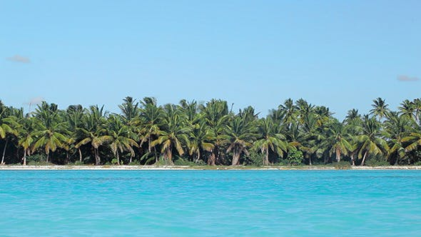 Thumbnail for Tropical Scene With Palms And Blue Sea