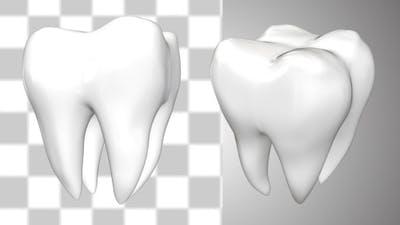 Tooth Rotate