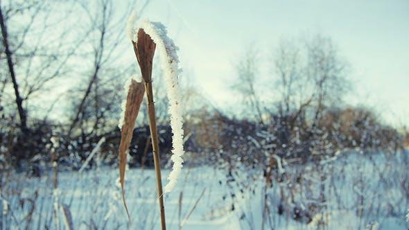 Thumbnail for Winter Grass 2