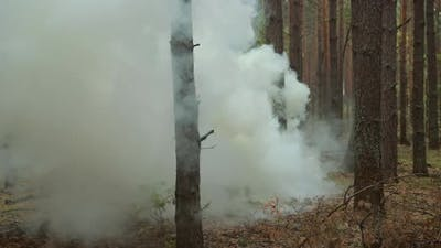 Smoke in Autumn Pine Forest