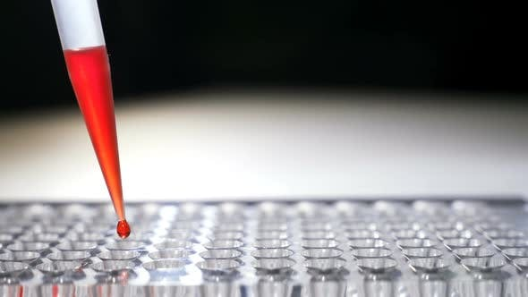 Thumbnail for Researcher Pipetts Samples in Well Microplate. Medical Test of Blood or Dna