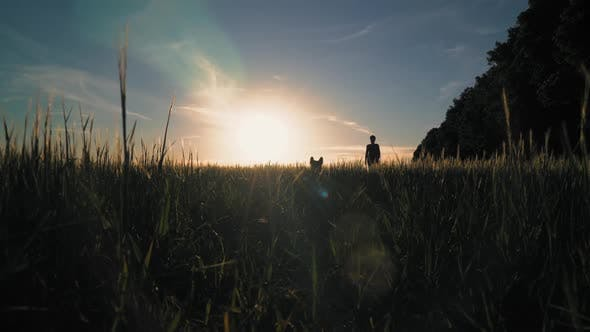 Thumbnail for Girl Walks with Puppy at Sundown