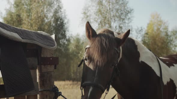 The Unsaddled Horse Is Standing Near the Fence, Where the Saddle Is Removed, and Waving His Head