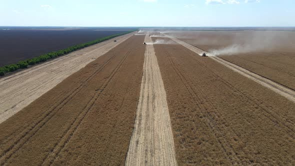 Thumbnail for The Combine Harvester Harvests In The Field. From A Bird's Eye View