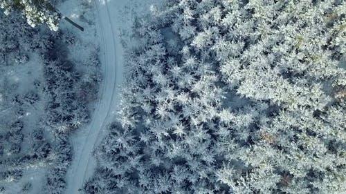 aerial winter spruce forest landscape