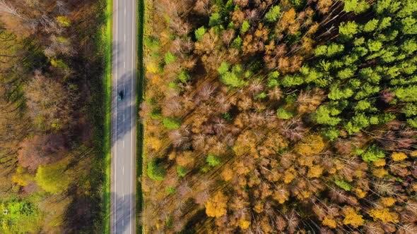 Hochwinkelansicht einer Straße durch den Herbstwald mit Kopienraum