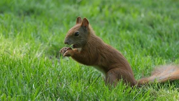 Eichhörnchen in einem Park