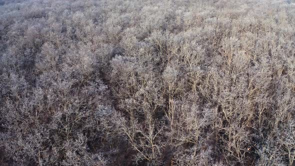 Thumbnail for Frozen forest at winter. Aerial view of the winter forest from above