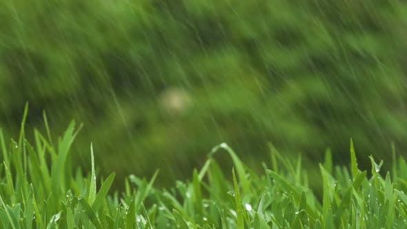 Thumbnail for Green Fresh Grass