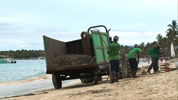 Thumbnail for Several Workers Cleaning Beach From Sea Weed